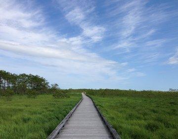 釧路湿原の魅力PartⅡ☆温根内木道で釧路湿原をお散歩♪解放感のある絶景とかわいいお花に感動!!