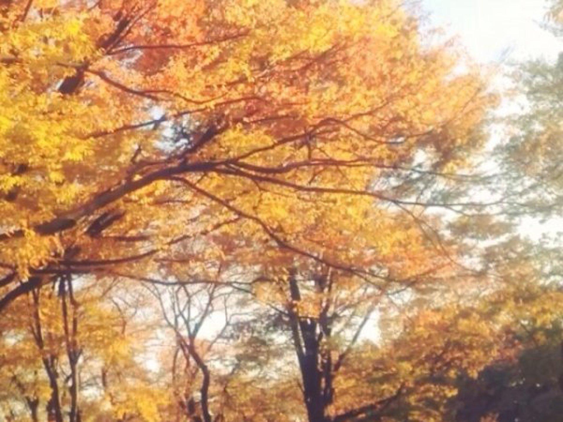 【秋の紅葉デートにおすすめ吉祥寺・井の頭公園】おすすめランチスポットにデートコース
