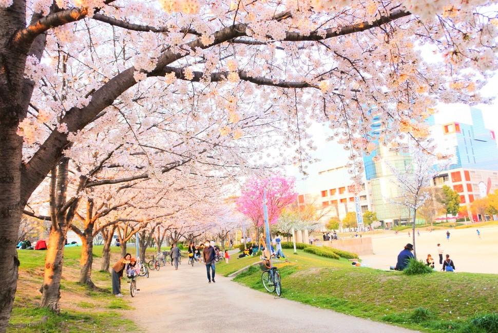 梅田から7分!最寄り駅から徒歩1分!大阪でお花見を楽しむなら駅近の扇町公園で決まり!   PlayLife [プレイライフ]