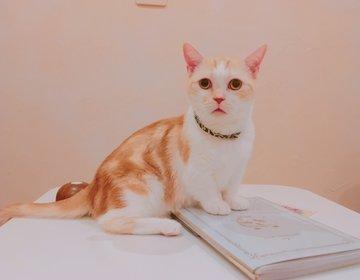 【吉祥寺】時間制限&延長料金なし! 猫好き必見の猫カフェ「てまりのおしろ」