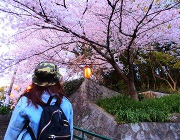 【登った人だけが体験できる】大阪の高台にあるリピート率100%の桜並木♡