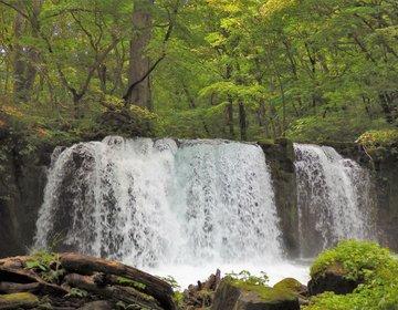 深緑の自然林と渓流美に癒される!青森県・奥入瀬渓流を歩く