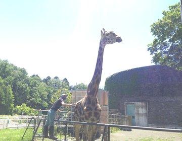 【円山動物園からマルヤマクラスが鉄板コース!】札幌のオアシスを満喫しちゃおう!