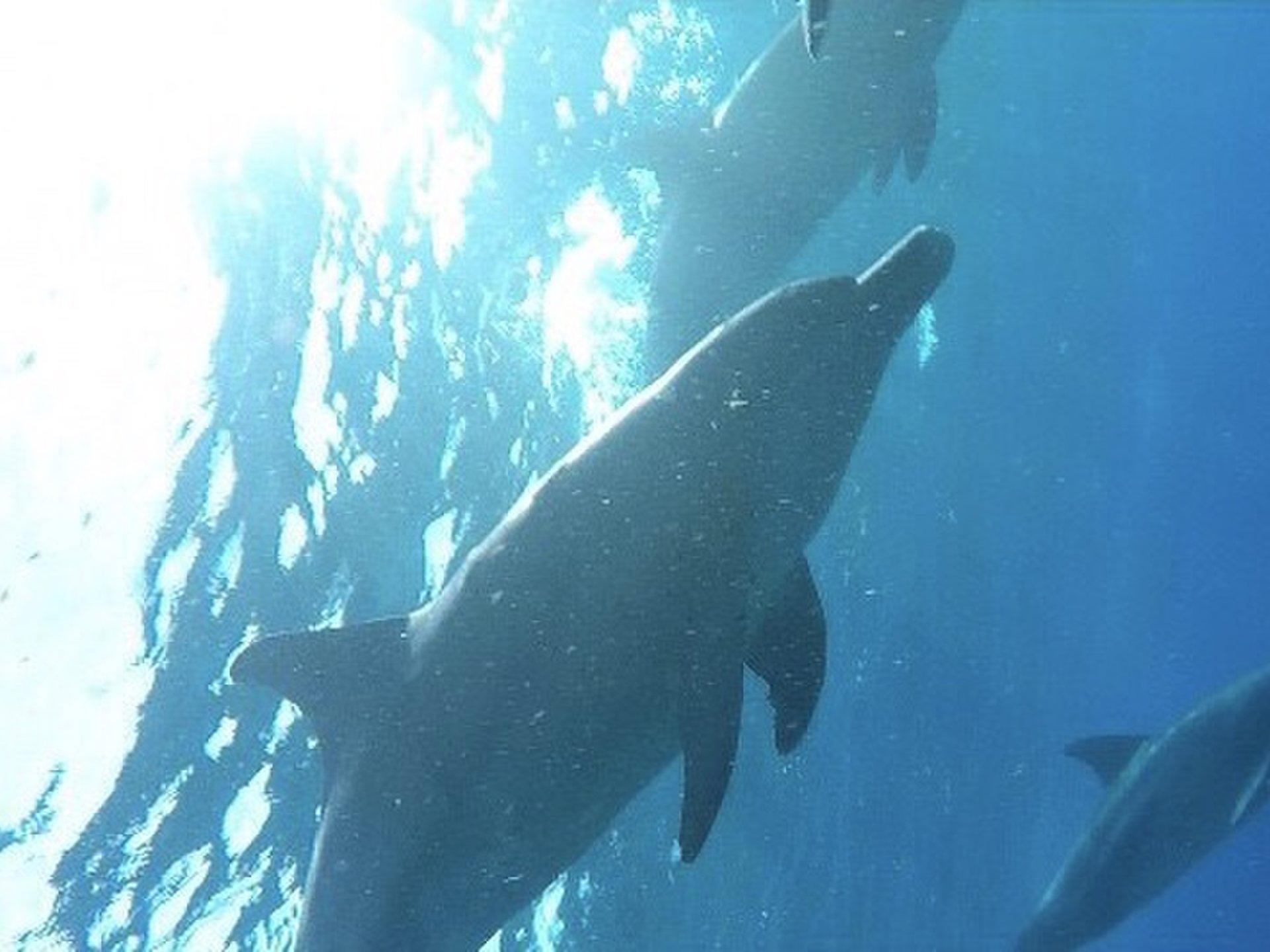 東京で野生のイルカと泳げる…⁉初めてのイルカスイムは東京「御蔵島」で!