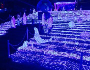 """【見逃せない!大阪のイルミネーションデート♡】あの""""海遊館""""が冬限定でキラキラになる!"""