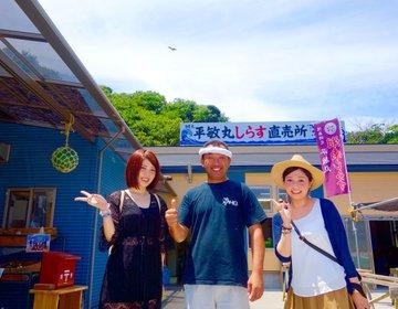 はとバスツアー【横須賀・おすすめ】釜揚げしらすを食べる&猿島無人島ガイド付き「はとバス」