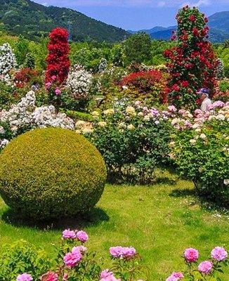 河津バガテル公園Jardin de Bagatelle