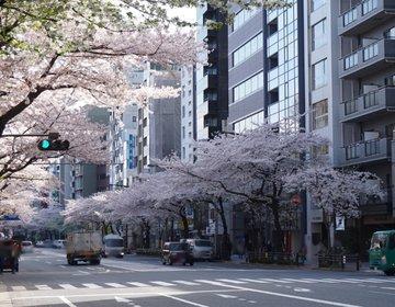 【保存版】市ヶ谷~靖国神社、桜の小道を通る桜満喫お散歩プラン♪