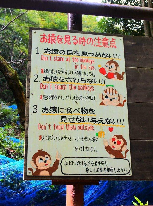 嵐山モンキーパークいわたやま