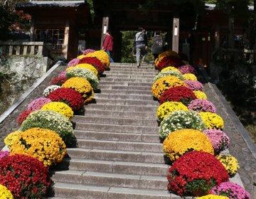 【静岡・伊豆】伊豆の小京都!修善寺温泉の由来にもなったお寺をお詣りしよう♪