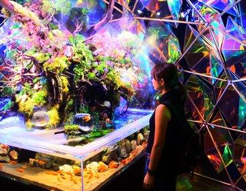 金魚ミュージアム&忍者タウン!今話題のミ・ナーラと奈良祭都ってどんなところ?