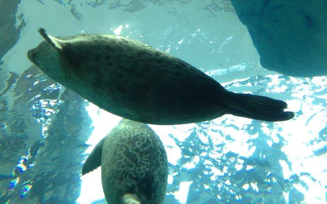 海遊館 (Osaka Aquarium Kaiyūkan)