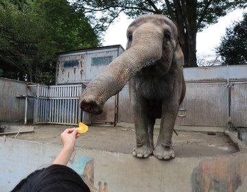 動物が近い! エサあげ放題! 宇都宮動物園で遊んで、絶品の宇都宮餃子を味わう!