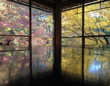 【紅葉の京都フォトジェニックNO1】瑠璃光院の反射する紅葉が凄い!苔の庭も見応えあり。