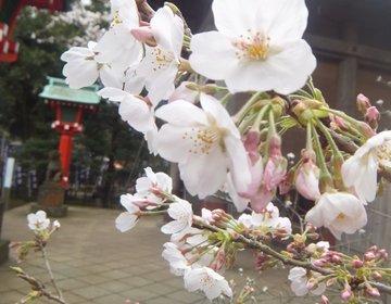 【お花見小旅行】江ノ島パワースポットめぐり!恋愛成就とお花見コース