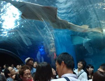 リニューアルオープンした品川のEPSON水族館