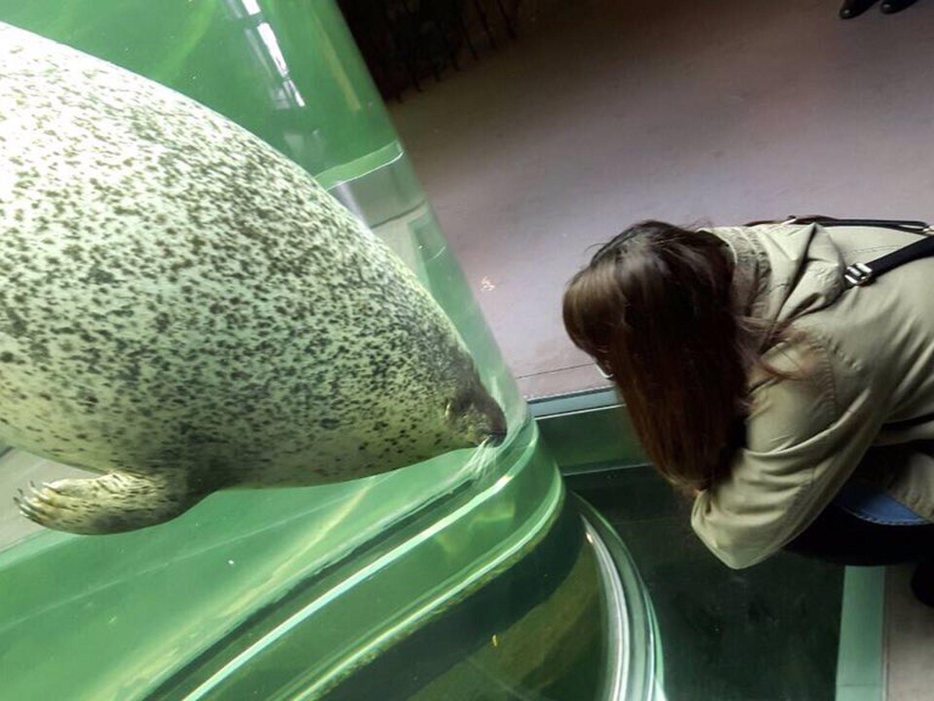 【日本最北の動物園!】旭山動物園は野生に近い動物の姿が見られるって本当?