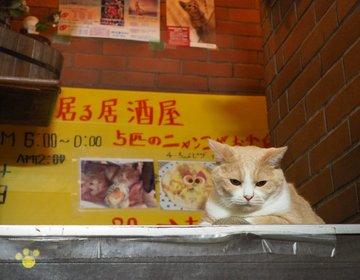 沼袋でディープ散歩をして江古田の猫居酒屋で癒される!まったり動物づくしデート