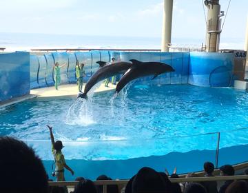 海だ!水族館だ!おしゃれカフェだ!江ノ島のおすすめデートコース