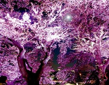 【夜桜をゆっくり観たい大人へ】夜になると人も少なく、ゆっくりしながらお花見できます。千鳥ヶ淵