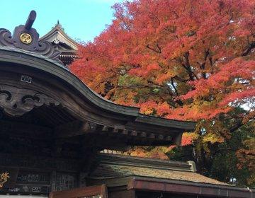 【高尾山ハイキング】秋の紅葉を見に行こう!高尾山ハイキングオススメです