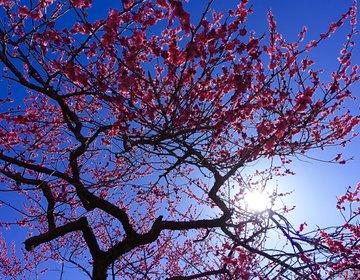 【無料・水戸の偕楽園でお花見♡アクセス方法も】フォトジェニックで絵はがきのようです。インスタ映え!