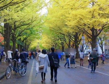 秋映えな名所 北大のイチョウ並木とオシャレなカフェ巡り。時計台も赤れんが庁舎も撮って楽しもう♪