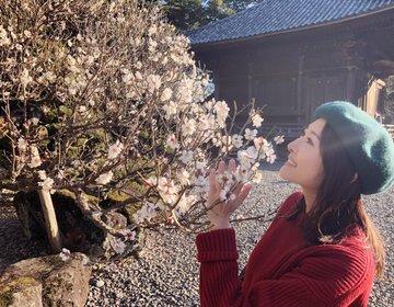 【成田公園】梅は咲いたか桜はまだかいな!梅の好きなところは甘酸っぱいこの香り!満開の梅を見に行こう!