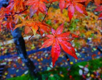 〔岡山・奥津〕10月下旬〜11月中旬 秋を感じる紅葉祭り