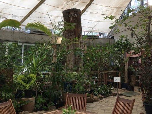 東京都夢の島熱帯植物館