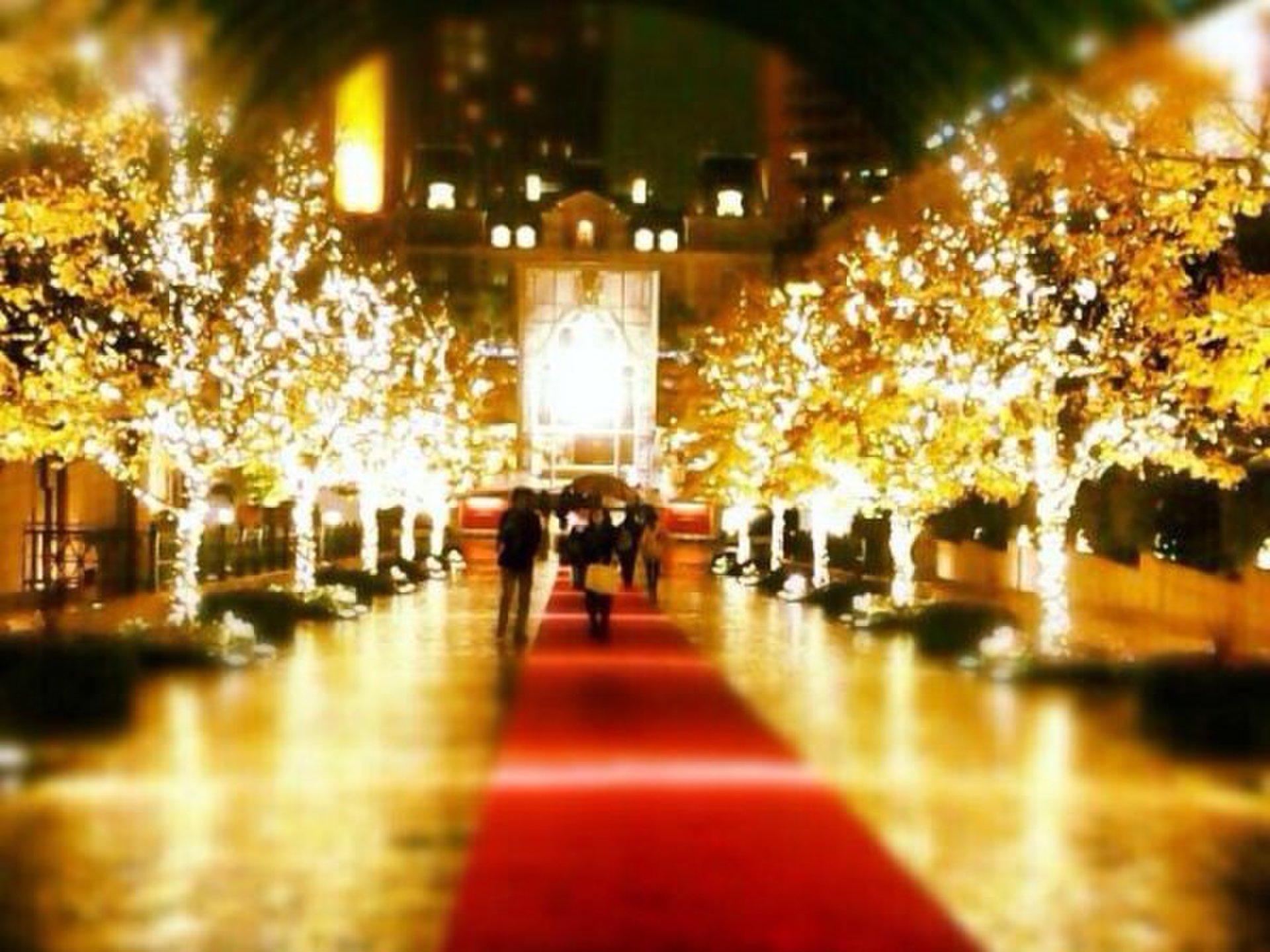 代官山で過ごすクリスマス♡恵比寿までのとっておきイルミネーション&ディナーデートコースを伝授