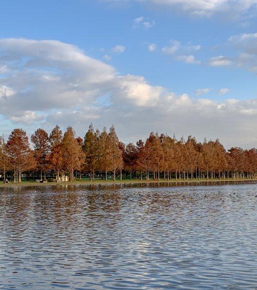 都立水元公園