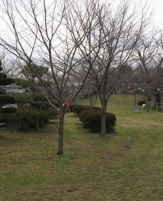 城山公園(御船町)