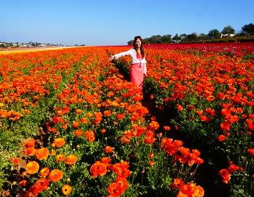 カリフォルニアアウトドア女子旅☆サンディエゴ周辺の可愛い植物園。フラワーフィールド