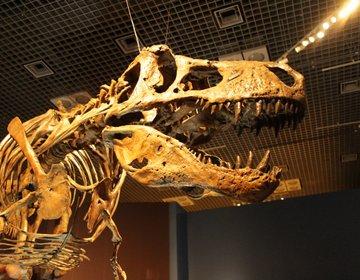 【恐竜博をディープに楽しむ】 国立科学博物館で恐竜めぐり(常設展&特別展)、ティラノ&スピノに圧巻!