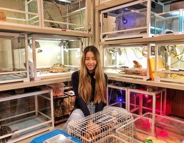 ピッコロズー都内おすすめ動物カフェ♡ハリネズミ・小動物爬虫類カフェ