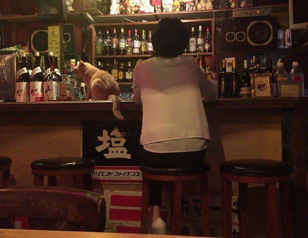 雑貨BAR 福猫堂