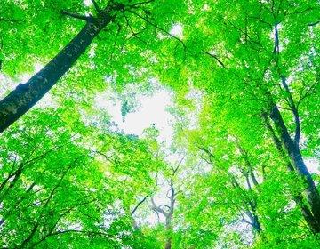 疲れた人は緑の絶景の中でリフレッシュ 世界遺産白神山地を巡りに弘前へ