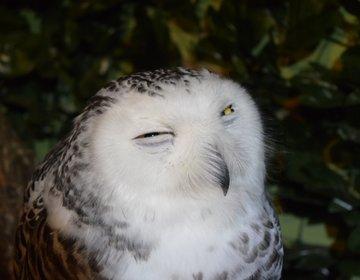 【京都新デートスポット】フクロウの森でふれあいデート♩