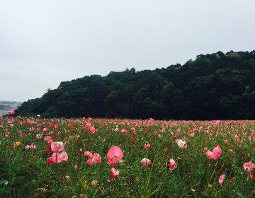 """無料で家族全員が1日中楽しめる花のテーマパーク""""くりはま花の国""""の魅力をご紹介!年2回のイベント情報"""
