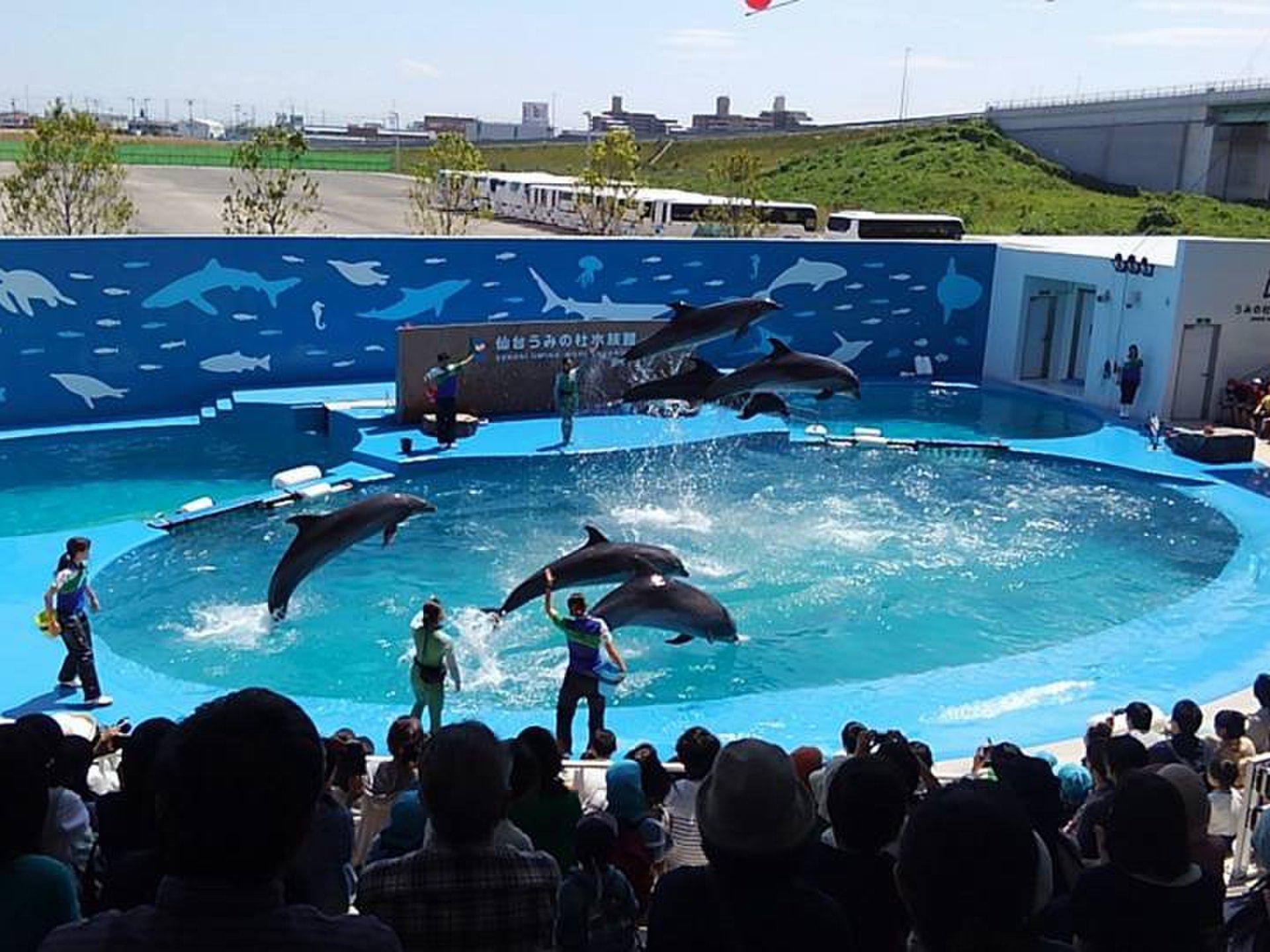 東北最大級の水族館、仙台うみの杜水族館!周辺情報までご紹介