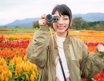 毎日dポイントが最大20倍!?買い物や旅行でどれくらいお得になるか那須旅行で検証してみた!