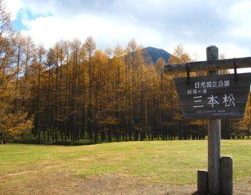 奥日光の名所を巡る! 中禅寺湖、戦場ヶ原、三本松のカラマツ