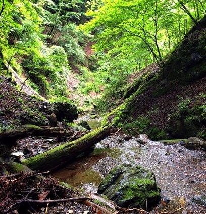 山梨 白糸の滝