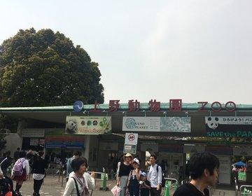 【上野公園】気軽にぶらっとお出かけプラン
