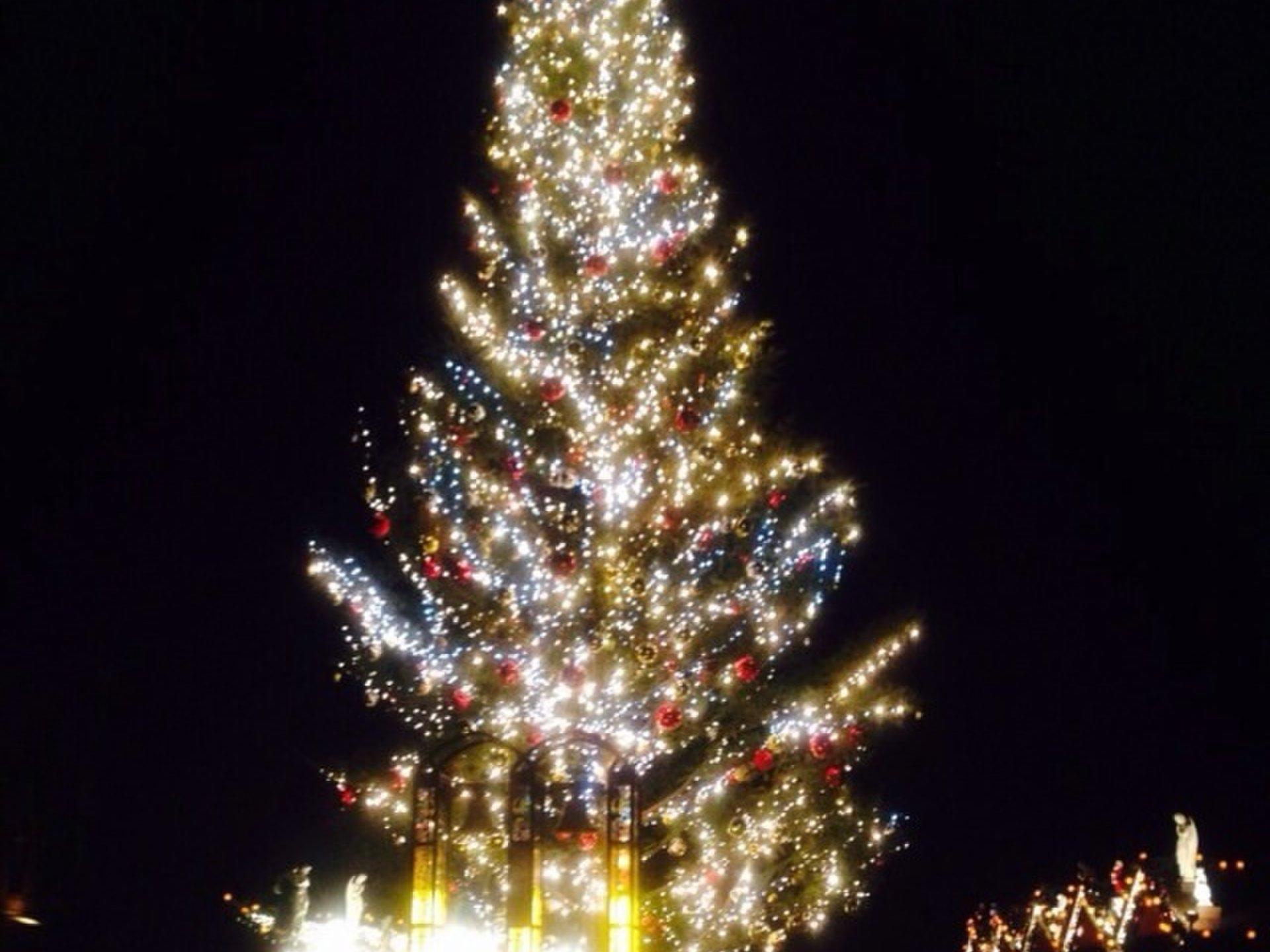 みなとみらいで素敵なクリスマスを♪ツリーとイルミネーションを同時に見られる欲張りデートコース