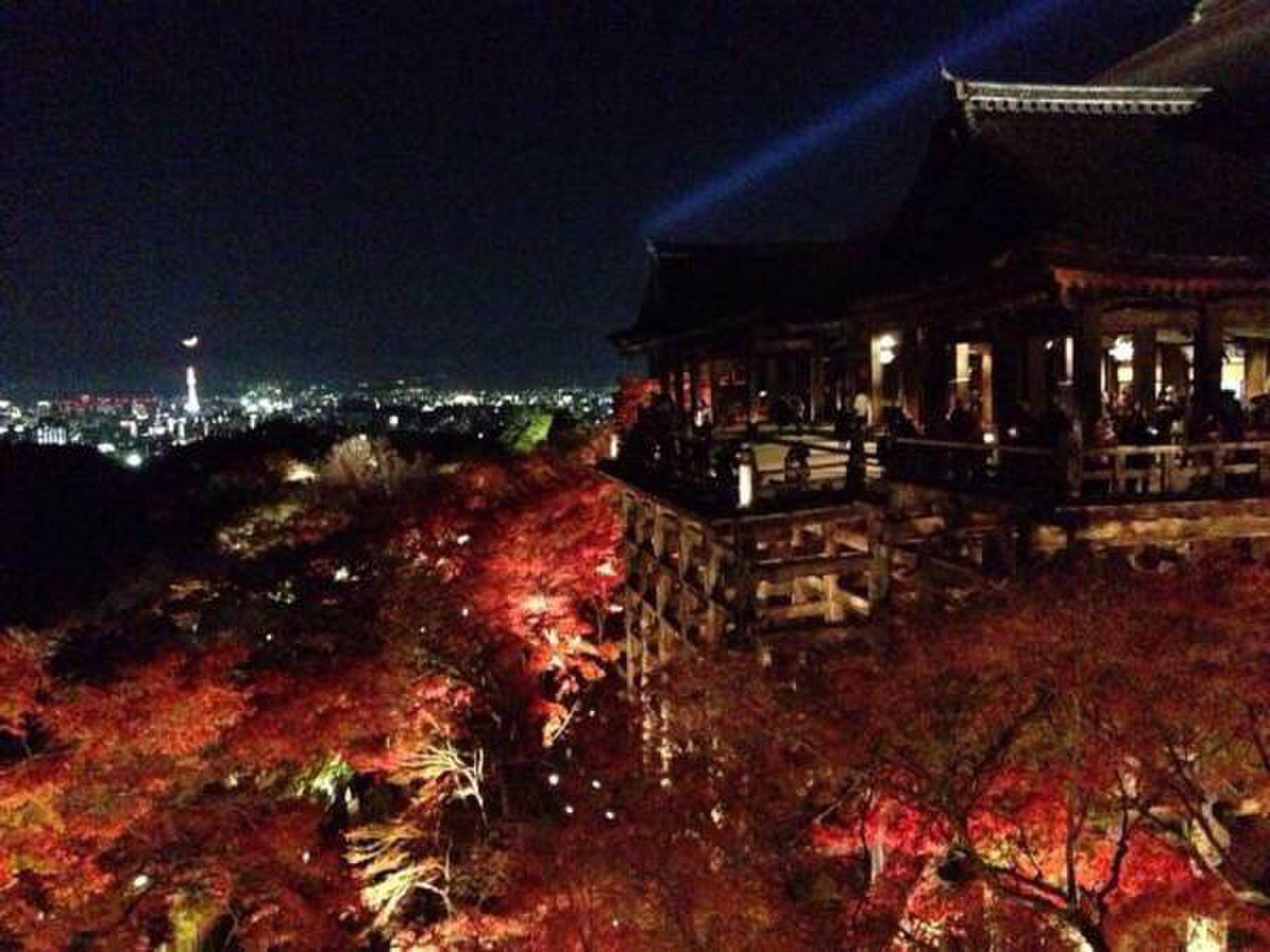 【京都】涙がでるほど美しい紅葉ライトアップおすすめTOP3【2016年版】