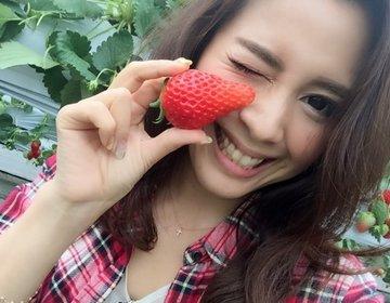 """ドライブデートにおすすめ!千葉で最大級のいちご農園、富津アクアファームで""""章姫""""をいちご狩り!"""