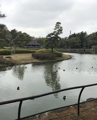 千葉公園 綿打池