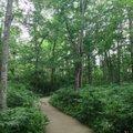 十勝 千年の森